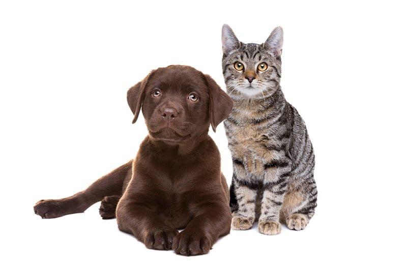 Evita los pelos de mascotas